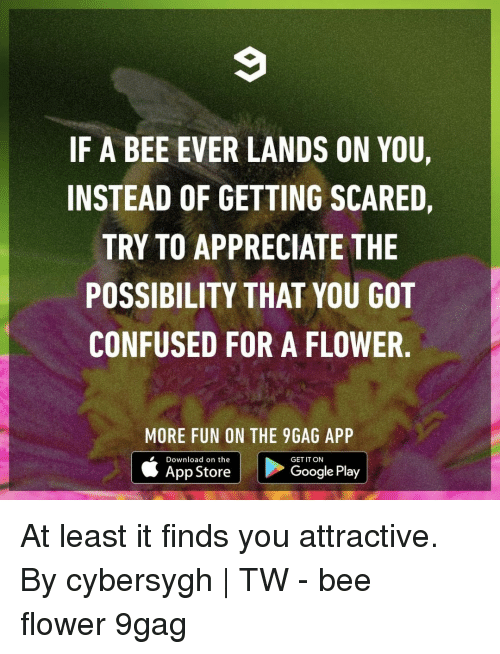 9gag, Confused, and Google: IF A BEE EVER LANDS ON YOU,  INSTEAD OF GETTING SCARED,  TRY TO APPRECIATE THE  POSSIBILITY THAT YOU GOT  CONFUSED FOR A FLOWER  MORE FUN ON THE 9GAG APP  Download on the  App Store  GET IT ON  Google Play At least it finds you attractive.⠀ By cybersygh | TW⠀ -⠀ bee flower 9gag