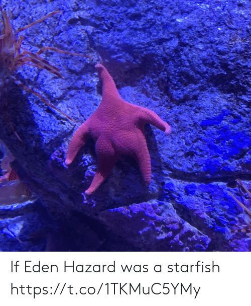 Memes, Eden Hazard, and 🤖: If Eden Hazard was a starfish https://t.co/1TKMuC5YMy
