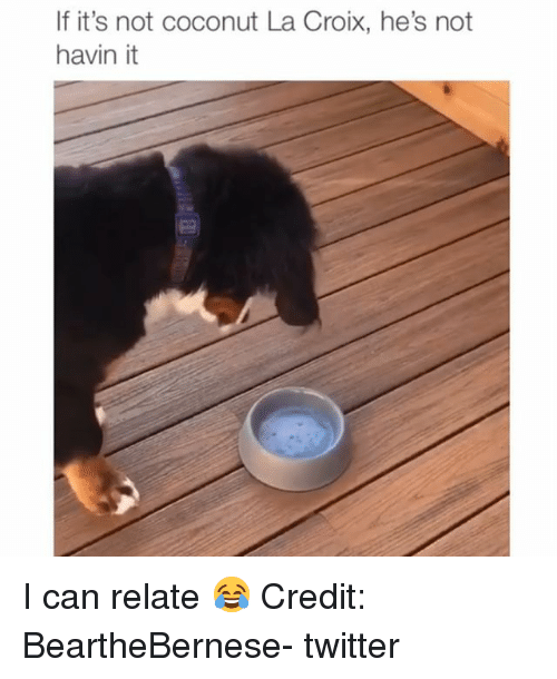Memes, Twitter, and 🤖: If it's not coconut La Croix, he's not  havin it I can relate 😂 Credit: BeartheBernese- twitter