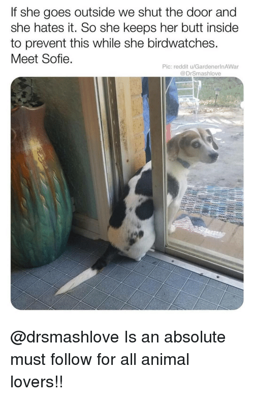 Butt, Memes, and Reddit: If she goes outside we shut the door and  she hates it. So she keeps her butt inside  to prevent this while she birdwatches.  Meet Sofie  Pic: reddit u/GardenerlnAWar  @DrSmashlove @drsmashlove Is an absolute must follow for all animal lovers!!