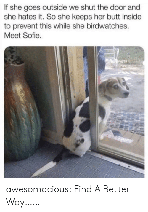 Butt, Tumblr, and Blog: If she goes outside we shut the door and  she hates it. So she keeps her butt inside  to prevent this while she birdwatches.  Meet Sofie. awesomacious:  Find A Better Way……