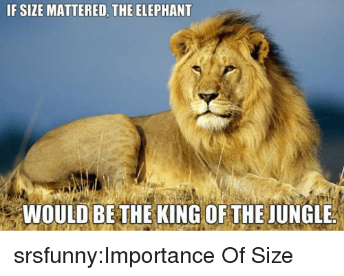 mattered: IF SIZE MATTERED, THE ELEPHANT  94  WOULD BE THE KING OF THE JUNGLE srsfunny:Importance Of Size