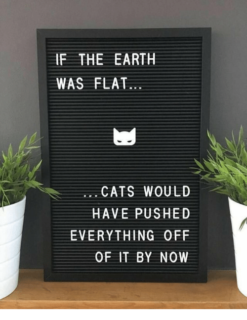 Cats, Earth, and Now: IF THE EARTH  WAS FLAT...  CATS WOULD  HAVE PUSHED  EVERYTHING OFF  OF IT BY NOW