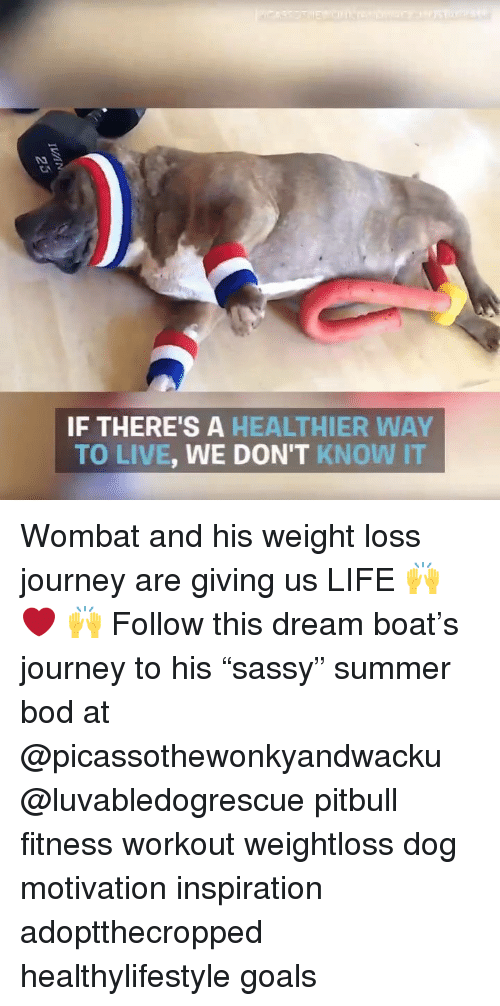 """Goals, Journey, and Life: IF THERE'S A HEALTHIER WAY  TO LIVE, WE DON'T KNOW IT Wombat and his weight loss journey are giving us LIFE 🙌 ❤️ 🙌 Follow this dream boat's journey to his """"sassy"""" summer bod at @picassothewonkyandwacku @luvabledogrescue pitbull fitness workout weightloss dog motivation inspiration adoptthecropped healthylifestyle goals"""