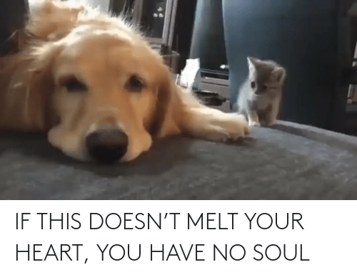 soul: IF THIS DOESN'T MELT YOUR HEART, YOU HAVE NO SOUL