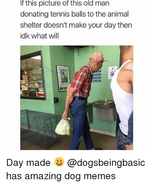 Funny, Memes, and Old Man: If this picture of this old man  donating tennis balls to the animal  shelter doesn't make your day then  idk what will Day made 😀 @dogsbeingbasic has amazing dog memes