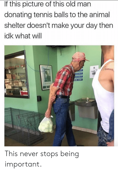 Animal Shelter: If this picture of this old man  donating tennis balls to the animal  shelter doesn't make your day then  idk what will This never stops being important.