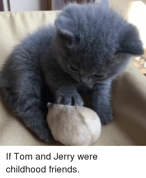 Dank, Friends, and Tom and Jerry: If Tom and Jerry were childhood friends.