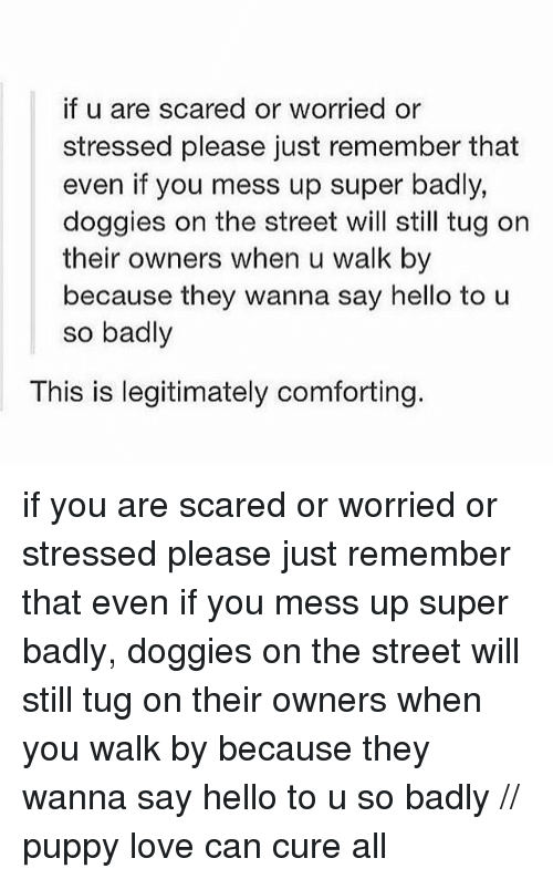 Hello, Love, and Puppy: if u are scared or worried or  stressed please just remember that  even if you mess up super badly,  doggies on the street will still tug on  their owners when u walk by  because they wanna say hello to u  so badly  This is legitimately comforting. if you are scared or worried or stressed please just remember that even if you mess up super badly, doggies on the street will still tug on their owners when you walk by because they wanna say hello to u so badly // puppy love can cure all