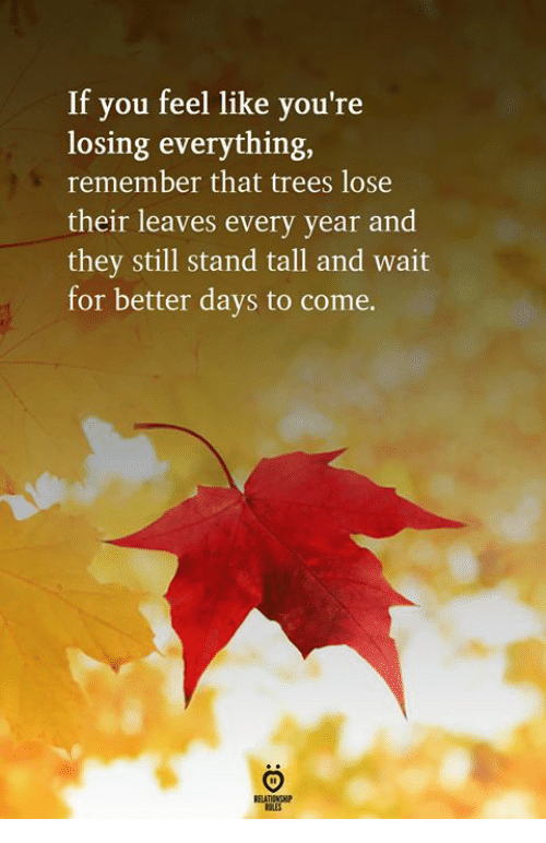 Better Days: If you feel like you're  losing everything,  remember that trees lose  their leaves every year and  they still stand tall and wait  for better days to come.  ELATIONGHP
