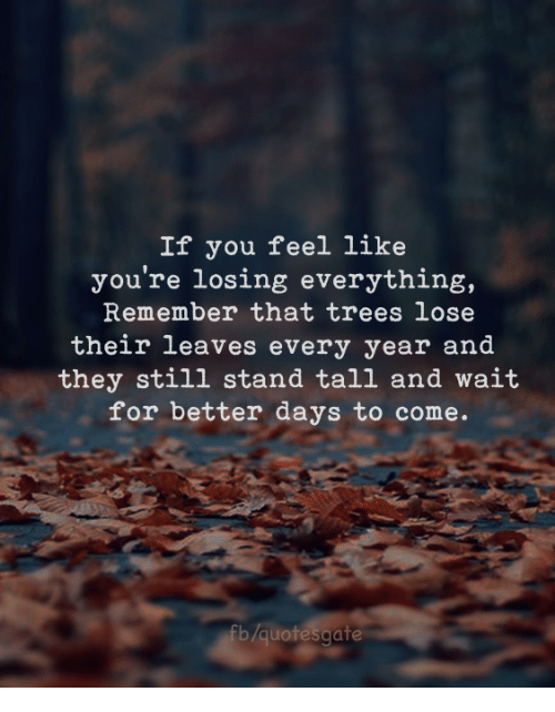 Better Days: If you feel like  you're losing everything,  Remember that trees lose  their leaves every year and  they still stand tall and wait  for better days to come.  fb/quotesgate