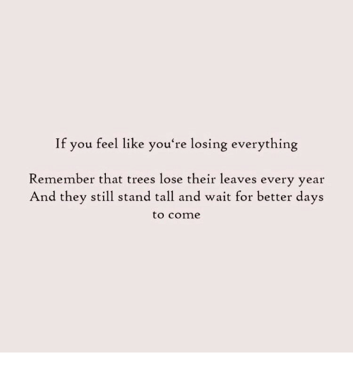Better Days: If you feel like you're losing everything  Remember that trees lose their leaves every vear  And they still stand tall and wait for better days  to cone