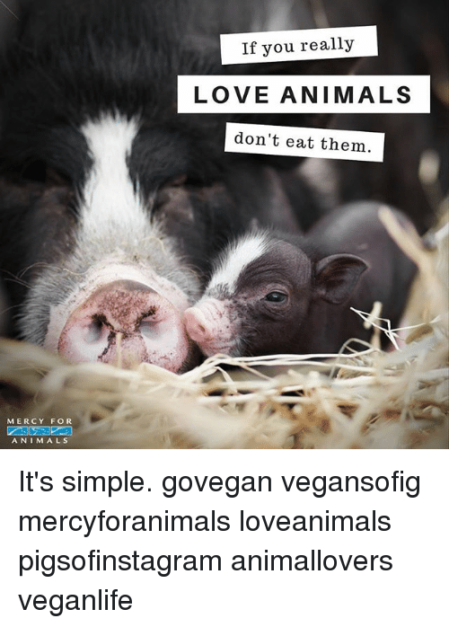 Animals, Love, and Memes: If you really  LOVE ANIMALS  don't eat them  MERCY FOR  ANIM ALS It's simple. govegan vegansofig mercyforanimals loveanimals pigsofinstagram animallovers veganlife
