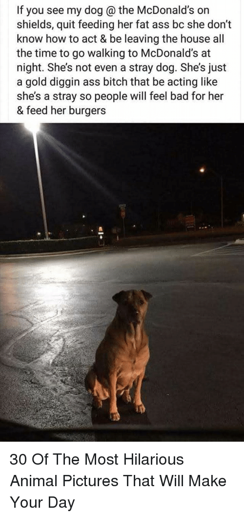 """Ass, Bad, and Bitch: If you see my dog @ the McDonald's on  shields, quit feeding her fat ass bc she don""""t  know how to act & be leaving the house all  the time to go walking to McDonald's at  night. She's not even a stray dog. She's just  a gold diggin ass bitch that be acting like  she's a stray so people will feel bad for her  & feed her burgers 30 Of The Most Hilarious Animal Pictures That Will Make Your Day"""