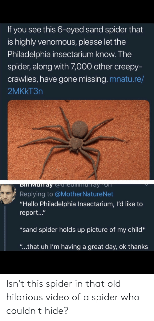 """Philadelphia: If you see this 6-eyed sand spider that  is highly venomous, please let the  Philadelphia insectarium know. The  spider, along with ,000 other creepy-  crawlies, have gone missing. mnatu.re/  2MKkT3n  Replying to @MotherNatureNet  """"Hello Philadelphia Insectarium, I'd like to  report...""""  *sand spider holds up picture of my child*  """"...that uh I'm having a great day, ok thanks Isn't this spider in that old hilarious video of a spider who couldn't hide?"""