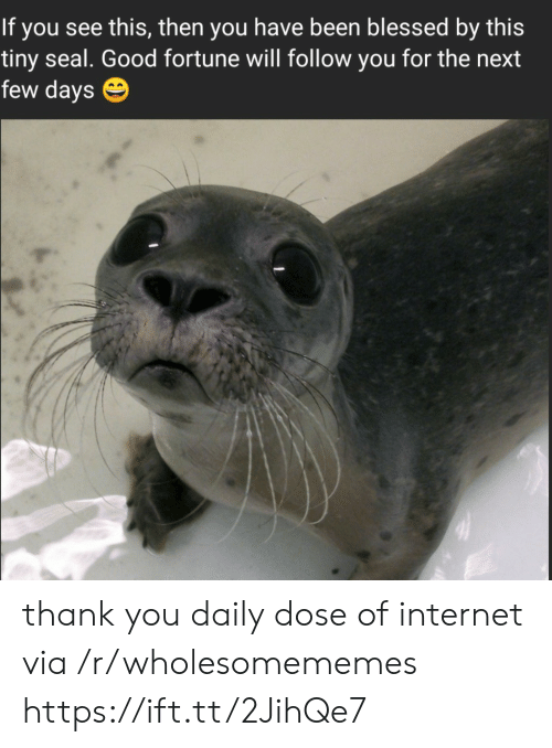 dose: If you see this, then you have been blessed by this  tiny seal. Good fortune will follow you for the next  few days thank you daily dose of internet via /r/wholesomememes https://ift.tt/2JihQe7