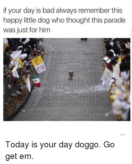 Bad, Happy, and Today: if your day is bad always remember this  happy little dog who thought this parade  was just for him <p>Today is your day doggo. Go get em.</p>