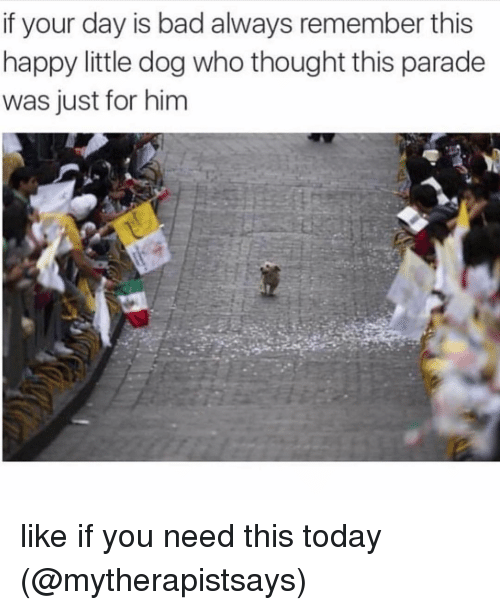 Bad, Memes, and Happy: if your day is bad always remember this  happy little dog who thought this parade  was just for him like if you need this today (@mytherapistsays)