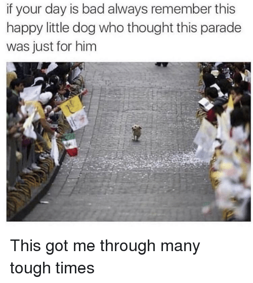Bad, Happy, and Tough: if your day is bad always remember this  happy little dog who thought this parade  was just for him This got me through many tough times