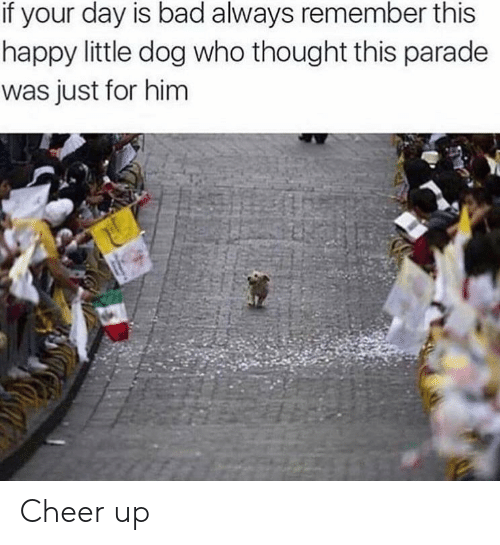 always remember: if your day is bad always remember this  happy little dog who thought this parade  was just for him Cheer up