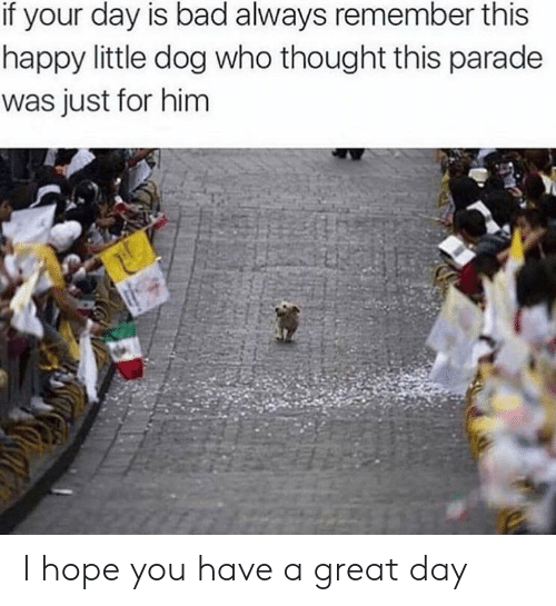 always remember: if your day is bad always remember this  happy little dog who thought this parade  was just for him I hope you have a great day