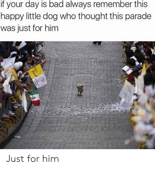always remember: if your day is bad always remember this  happy little dog who thought this parade  was just for him Just for him