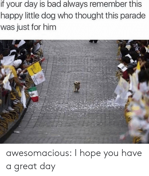 always remember: if your day is bad always remember this  happy little dog who thought this parade  was just for him awesomacious:  I hope you have a great day