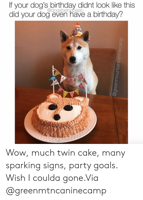 Birthday, Dogs, and Goals: If your dog's birthday didnt look like this  did your dog even have a birthday?  @dogsbeingbasic Wow, much twin cake, many sparking signs, party goals. Wish I coulda gone.Via @greenmtncaninecamp