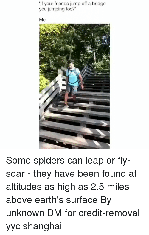 "Friends, Memes, and Spiders: ""If your friends jump off a bridge  you jumping too?""  Me: Some spiders can leap or fly-soar - they have been found at altitudes as high as 2.5 miles above earth's surface By unknown DM for credit-removal yyc shanghai"