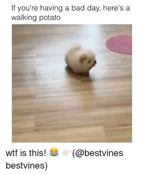 potatoe: If you're having a bad day, here's a  walking potato wtf is this! 😂 👉🏻(@bestvines bestvines)