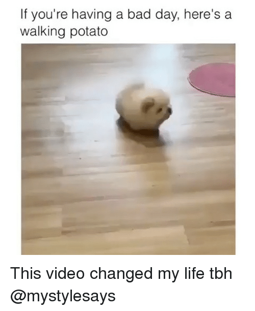 potatoe: If you're having a bad day, here's a  walking potato This video changed my life tbh @mystylesays
