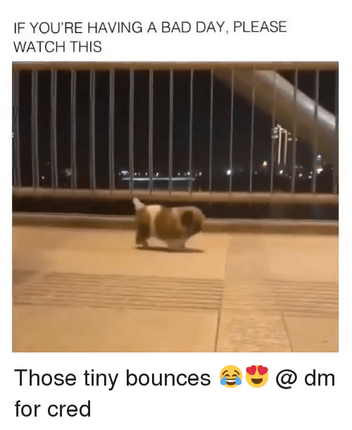 Bad, Bad Day, and Memes: IF YOU'RE HAVING A BAD DAY, PLEASE  WATCH THIS Those tiny bounces 😂😍 @ dm for cred
