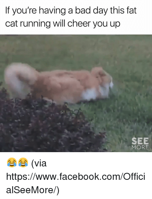 Bad, Bad Day, and Facebook: If you're having a bad day this fat  cat running will cheer you up  SEE  MORE 😂😂  (via https://www.facebook.com/OfficialSeeMore/)