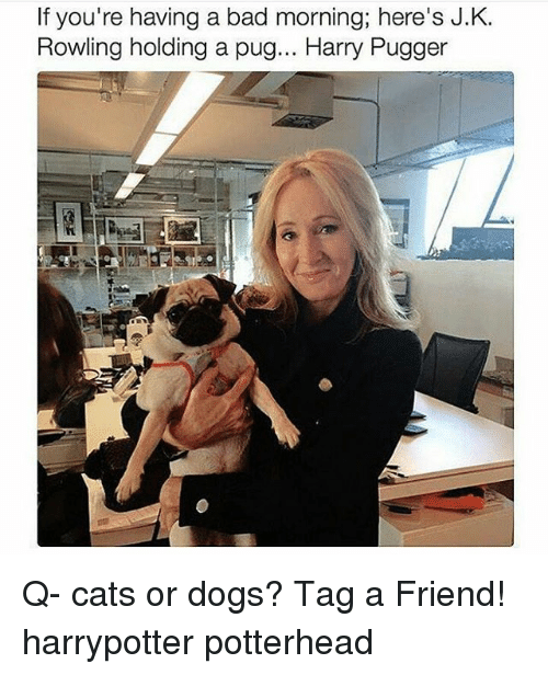 Bad Morning: If you're having a bad morning; here's J.K.  Rowling holding a pug... Harry Pugger Q- cats or dogs? Tag a Friend! harrypotter potterhead