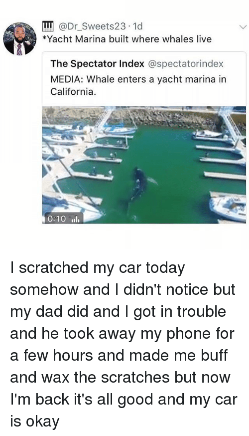 Dad, Memes, and Phone: II @Dr_Sweets23 1d  Yacht Marina built where whales live  The Spectator Index @spectatorindex  MEDIA: Whale enters a yacht marina in  California  0:10 l I scratched my car today somehow and I didn't notice but my dad did and I got in trouble and he took away my phone for a few hours and made me buff and wax the scratches but now I'm back it's all good and my car is okay