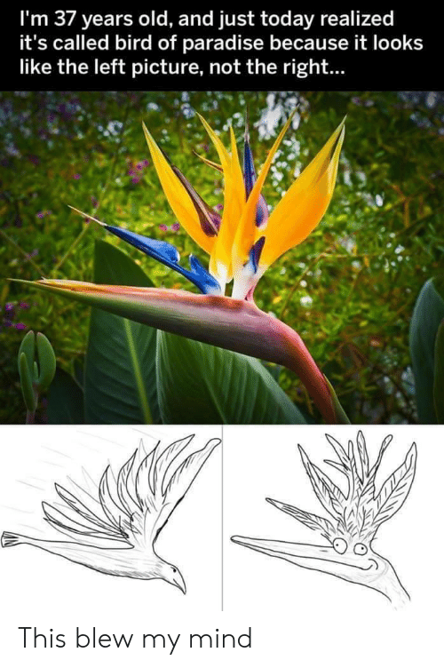 Blew My Mind: I'm 37 years old, and just today realized  it's called bird of paradise because it looks  like the left picture, not the right... This blew my mind
