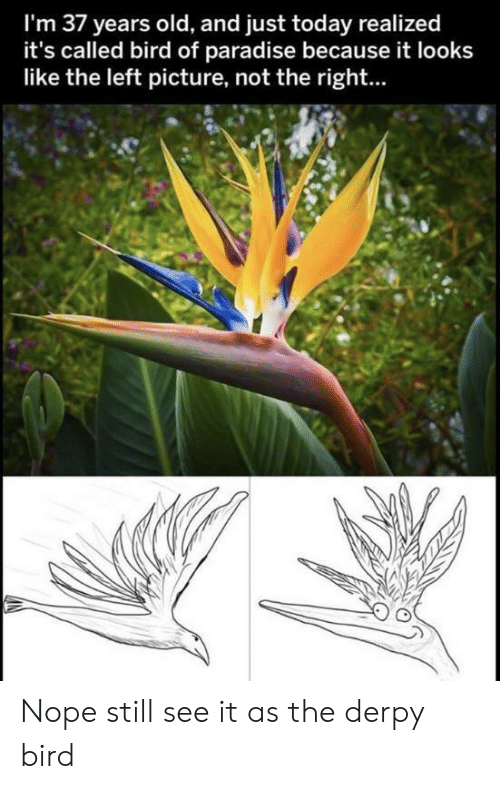 Nope: I'm 37 years old, and just today realized  it's called bird of paradise because it looks  like the left picture, not the right... Nope still see it as the derpy bird