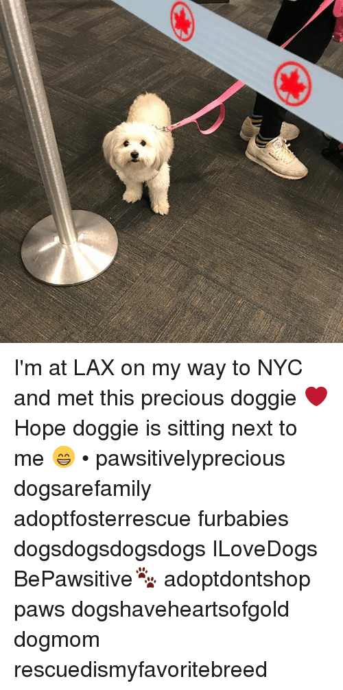 Memes, Precious, and Hope: I'm at LAX on my way to NYC and met this precious doggie ❤️ Hope doggie is sitting next to me 😁 • pawsitivelyprecious dogsarefamily adoptfosterrescue furbabies dogsdogsdogsdogs ILoveDogs BePawsitive🐾 adoptdontshop paws dogshaveheartsofgold dogmom rescuedismyfavoritebreed