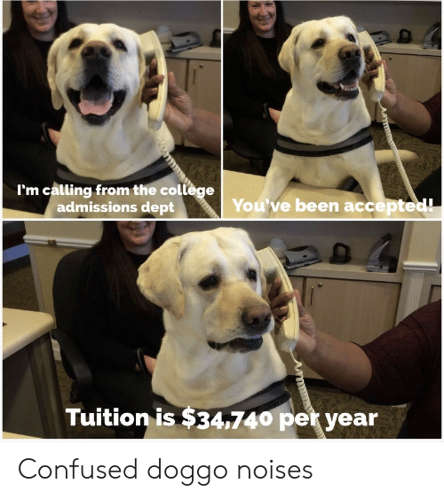 Accepted: I'm calling from the college  admissions dept  You've been accepted!  Tuition is $34,740 per year Confused doggo noises