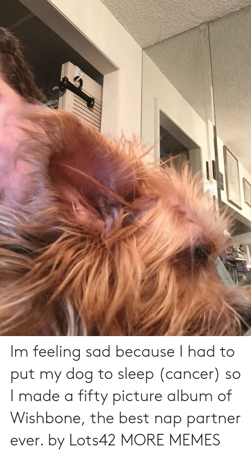 Dank, Memes, and Target: Im feeling sad because I had to put my dog to sleep (cancer) so I made a fifty picture album of Wishbone, the best nap partner ever. by Lots42 MORE MEMES