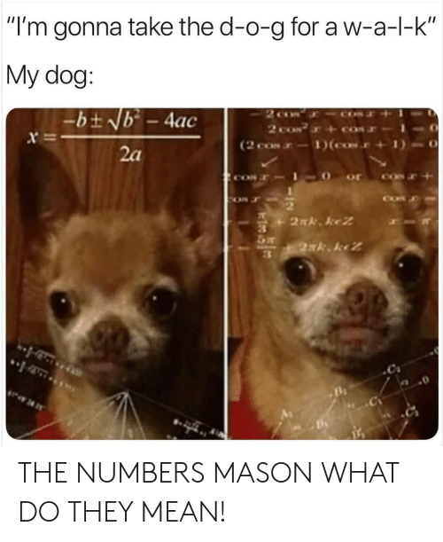 """cos: """"I'm gonna take the d-o-g for a w-a-l-k  My dog:  2 co  2 coN  (2 cos-1)(cos.  -bt Nb - 4ac  x  2a  2N. keZ  2xk keZ THE NUMBERS MASON WHAT DO THEY MEAN!"""