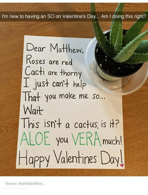 Cactie: I'm new to having an SO on Valentine's Day... Am l doing this right?  Dear Matthew,  Roses are red  Cacti are thorny  I just can't help  That you make me so  Wait  This isn't a cactus, is it?  ALOE you VERA  much!  Happy Valentines Do  Source: tastefullyoffens