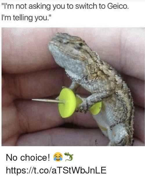 "geico: ""I'm not asking you to switch to Geico  I'm telling you."" No choice! 😂🦎 https://t.co/aTStWbJnLE"