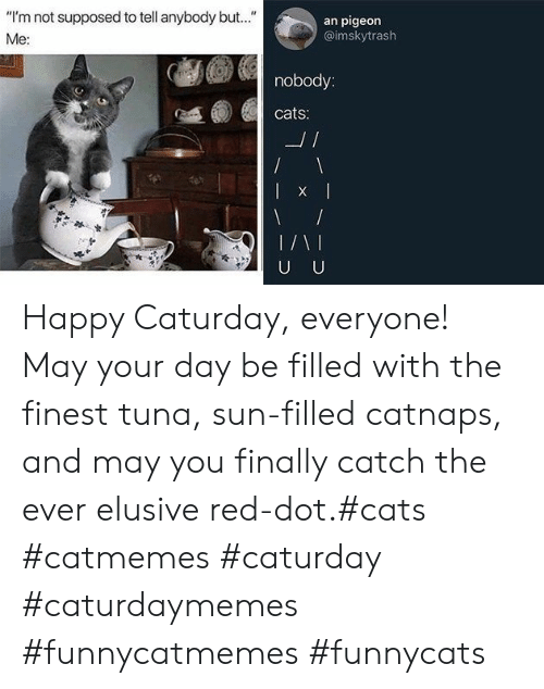 """Caturday: """"I'm not supposed to tell anybody but..""""  an pigeon  @imskytrash  Me:  nobody:  cats:  L/  U U Happy Caturday, everyone! May your day be filled with the finest tuna, sun-filled catnaps, and may you finally catch the ever elusive red-dot.#cats #catmemes #caturday #caturdaymemes #funnycatmemes #funnycats"""