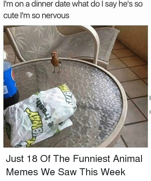 Funniest Animal: I'm on a dinner date what do l say he's so  cute l'm so nervous Just 18 Of The Funniest Animal Memes We Saw This Week