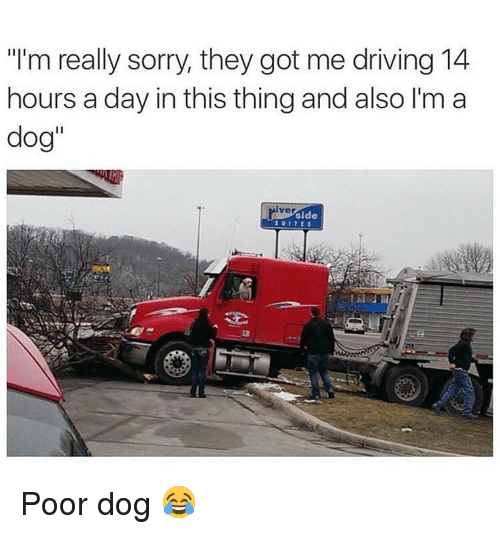 """Driving, Memes, and Sorry: """"I'm really sorry, they got me driving 14  hours a day in this thing and also I'm a  dog""""  iver  side  SUITES Poor dog 😂"""