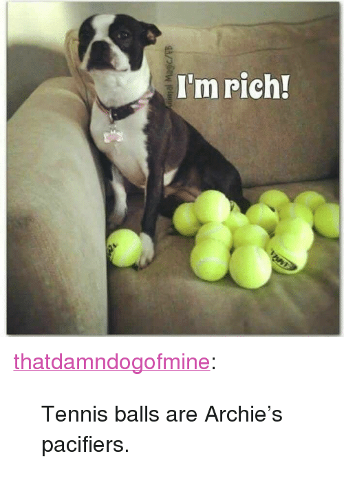 """Tumblr, Blog, and Http: I'm rich! <p><a href=""""http://thatdamndogofmine.tumblr.com/post/171751399182/tennis-balls-are-archies-pacifiers"""" class=""""tumblr_blog"""">thatdamndogofmine</a>:</p>  <blockquote><p>Tennis balls are Archie's pacifiers.</p></blockquote>"""