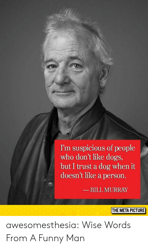 Bill Murray: I'm suspicious of people  who don't like dogs,  but I trust a dog when it  doesn't like a person.  BILL MURRAY  THE META PICTURE awesomesthesia:  Wise Words From A Funny Man