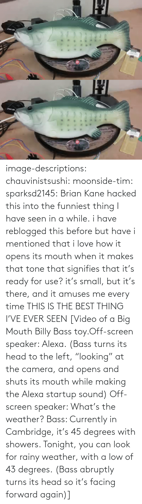 "Http: image-descriptions:  chauvinistsushi:  moonside-tim:  sparksd2145:  Brian Kane hacked this into the funniest thing I have seen in a while.  i have reblogged this before but have i mentioned that i love how it opens its mouth when it makes that tone that signifies that it's ready for use? it's small, but it's there, and it amuses me every time  THIS IS THE BEST THING I'VE EVER SEEN  [Video of a Big Mouth Billy Bass toy.Off-screen speaker: Alexa. (Bass turns its head to the left, ""looking"" at the camera, and opens and shuts its mouth while making the Alexa startup sound)  Off-screen speaker: What's the weather? Bass: Currently in Cambridge, it's 45 degrees with showers. Tonight, you can look for rainy weather, with a low of 43 degrees. (Bass abruptly turns its head so it's facing forward again)]"
