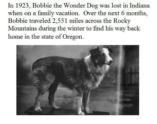 Dogs, Family, and Memes: In 1923, Bobbie the Wonder Dog was lost in Indiana  when on a family vacation. Over the next 6 months,  Bobbie traveled 2,551 miles across the Rocky  Mountains during the winter to find his way back  home in the state of Oregon.